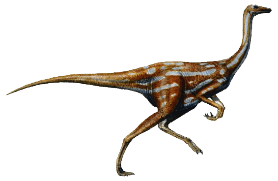 Aspecto general de gallimimus